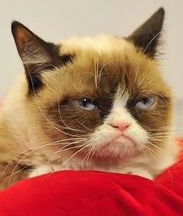 Grumpy-Cat-on-bed