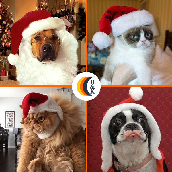 christmas-dog-cats