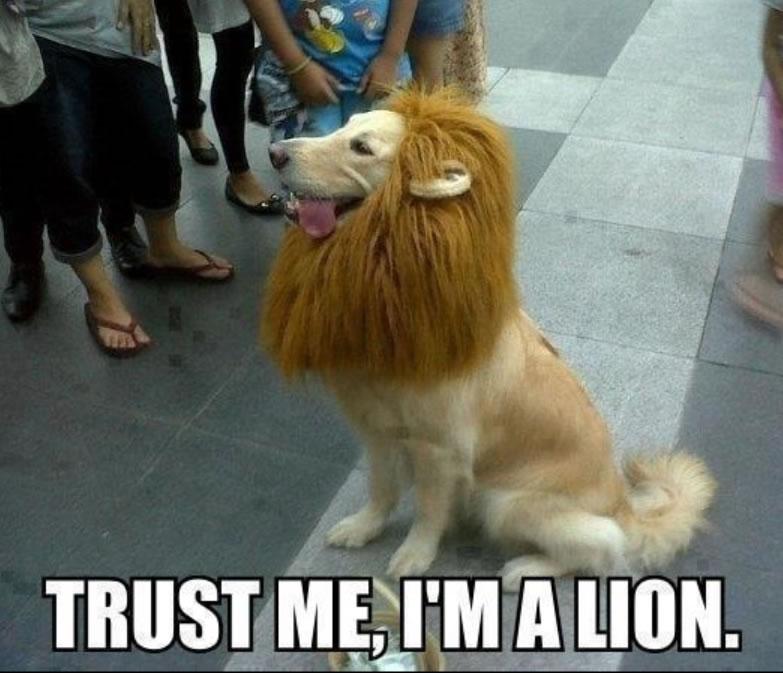 lion hound