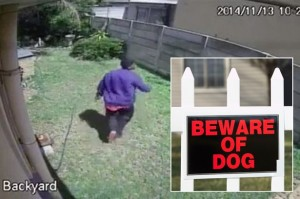 Burglar scared by small dog