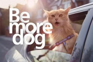 be more dog training