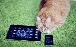 cats, news, FE, funny, strange