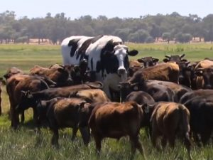 knickers the giant steer